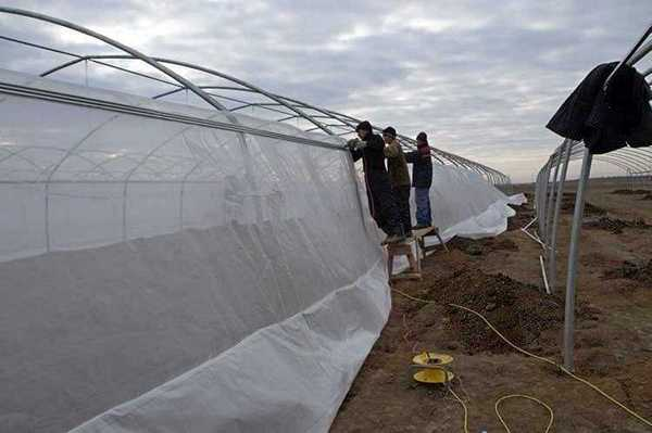 Construction of greenhouses TEDEN